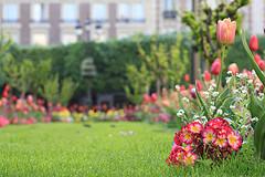 Entretien pelouse faire ou refaire son gazon - Refaire son gazon ...