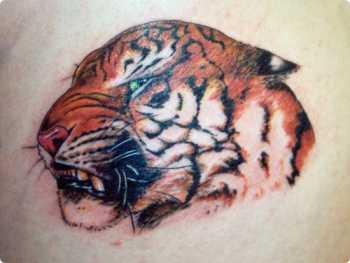 Tatouage tigre la force est en toi - Signification animaux tatouage ...