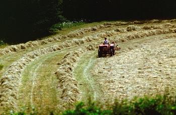 Bail Rural 6 Points à Connaître Avant De Signer